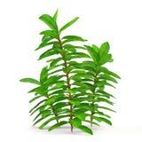 Exotic plant bush tree Stock Photos