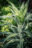 Exotic plant, close up shot in the greenhouse. Beautiful tropical background Royalty Free Stock Images