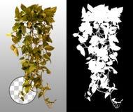 Exotic plant. Folliage in autumn