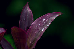 Exotic plant in the rain Royalty Free Stock Photography