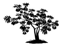 Exotic plant, silhouette. Exotic Plant with Leaves and Grass, Black Silhouettes Isolated on White Background. Vector Royalty Free Stock Photography