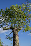Exotic plant Stock Photo