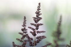 Exotic Plants Royalty Free Stock Image