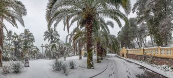 Exotic plants in the Arboretum of Sochi. Russia. Arboretum in Sochi - is a treasure trove of Russian subtropics, numbering more than 2000 exotic and rare plants Stock Images