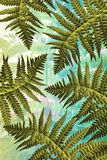 Exotic plants background with green fern leaves Royalty Free Stock Photo