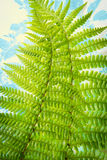 Exotic plants background with green fern leaves Royalty Free Stock Photography