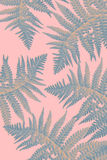 Exotic plants background with green fern leaves Royalty Free Stock Images