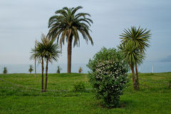 Exotic plants on the Black Sea coast. Batumi in Georgia Stock Photo