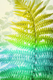 Exotic plants, blue and green fern leaves background. Exotic plants and colourful fern leaves on white background Stock Photo