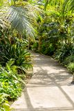 Exotic plants, cactuses, succulents and others. In the greenhouse Royalty Free Stock Photo