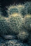 Exotic plants, cactuses, succulents and others. In the greenhouse Stock Photo
