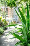 Exotic plants, cactuses, succulents and others in the greenhouse. In the sunshine Stock Photos
