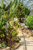 Exotic plants, cactuses, succulents and others in the greenhouse. In the sunshine Royalty Free Stock Photo