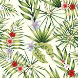Exotic plants composition nature illustration seamless. Exotic plants tropical hibiscus, plumeria flowers and banana leaves composition nature illustration Stock Photo
