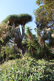Exotic plants in a garden Stock Photo
