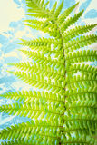 Exotic plants, green fern leaves background. Exotic plants and green fern leaves on white background Royalty Free Stock Images