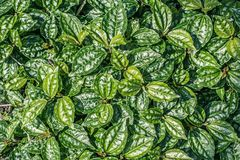 Exotic plants, green, patterned background. Exotic plants, green leaves, patterned background Stock Photo