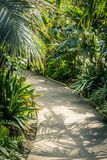 Palm trees and other exotic plants in the greenhouse. Exotic plants in the greenhouse Royalty Free Stock Images