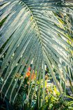 Palm trees and other exotic plants in the greenhouse. Exotic plants in the greenhouse Royalty Free Stock Image