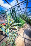 Exotic plants in the greenhouse in the sunshine Royalty Free Stock Photos
