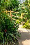 Exotic plants in the greenhouse in the sunshine. Fern plants, yucca and a wooden bridge royalty free stock photos