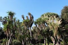Free Exotic Plants In A Garden Stock Photos - 46425663