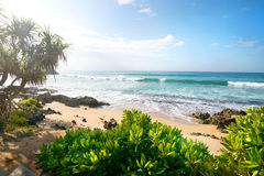 Exotic plants near ocean Royalty Free Stock Image