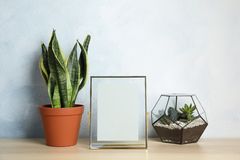 Exotic plants and photo frame on table near color wall. Home decor. Exotic plants and photo frame on table near color wall, space for text. Home decor royalty free stock images