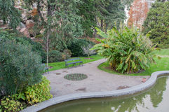 Exotic plants, pond and lawn in the park. In high quality stock image