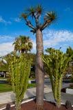 Exotic plants Stock Photo