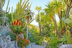 Among exotic plants Stock Photo