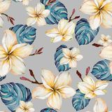 Exotic plumeria flowers and green monstera leaves on gray background in seamless tropical pattern. Watercolor painting. Hand painted floral illustration vector illustration