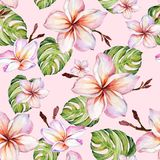 Exotic plumeria flowers and green monstera leaves on pink background in seamless tropical pattern. Watercolor painting. Hand painted floral illustration royalty free illustration