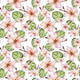 Exotic plumeria flowers and green monstera leaves in seamless tropical pattern. White background. Watercolor painting. Hand painted floral illustration. Fabric vector illustration