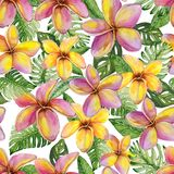 Exotic plumeria flowers and green monstera leaves on white background. Seamless tropical pattern in vivid colors. Watercolor painting. Hand painted floral vector illustration