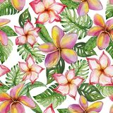 Exotic plumeria flowers and green monstera leaves on white background. Seamless tropical pattern in vivid colors. Watercolor painting. Hand painted floral royalty free illustration
