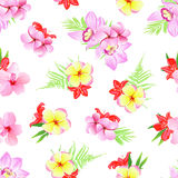 Exotic plumeria, frangipani, orchid seamless vector print Royalty Free Stock Photography
