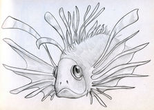 Exotic poisonous fish sketch. Hand drawn sketch of an exotic poisonous fish with it's fins spread Stock Images