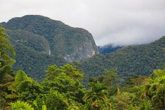 Exotic rainforest landscape. From gunung mulu national park borneo malaysia Royalty Free Stock Images
