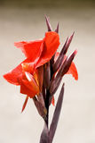 Exotic Red Flower Royalty Free Stock Photography