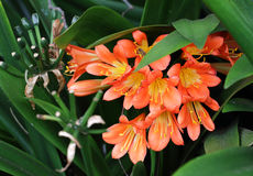 Free Exotic Red Flower With Yellow Pistils In Maui Island Stock Photo - 37505310