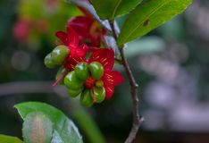 Exotic red and green flower stock photos