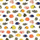 Exotic reef fish Seamless vector pattern. TRopical colorful fishes white background. Butterflyfish, Clown Triggerfish, Damsel, stock images