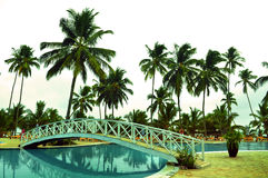 Exotic resort in Zanzibar. A neat well maintained resort, five star hotel village, in Zanzibar, Tanzania, in January, near the swimming pool area, with tall palm Royalty Free Stock Images