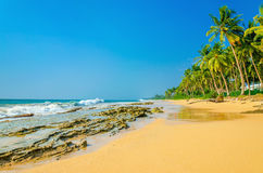 Exotic sandy beach with high palm trees Royalty Free Stock Photos