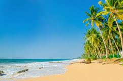 Exotic sandy beach with high palm trees Royalty Free Stock Photo