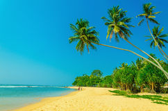 Exotic sandy beach with high palm trees Stock Photo