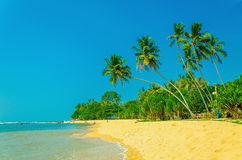 Exotic sandy beach with high palm trees Stock Images