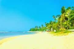 Exotic sandy beach with high palm trees Stock Photos