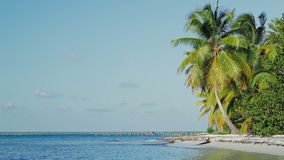 Exotic scene with palms and sea. Vacation in. Scenic view of exotic beach. Shore with huge coconut palms and quiet sea against clear blue sky. Summer vacation in stock video footage